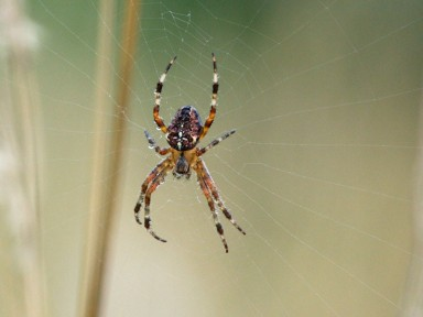 araignées 2