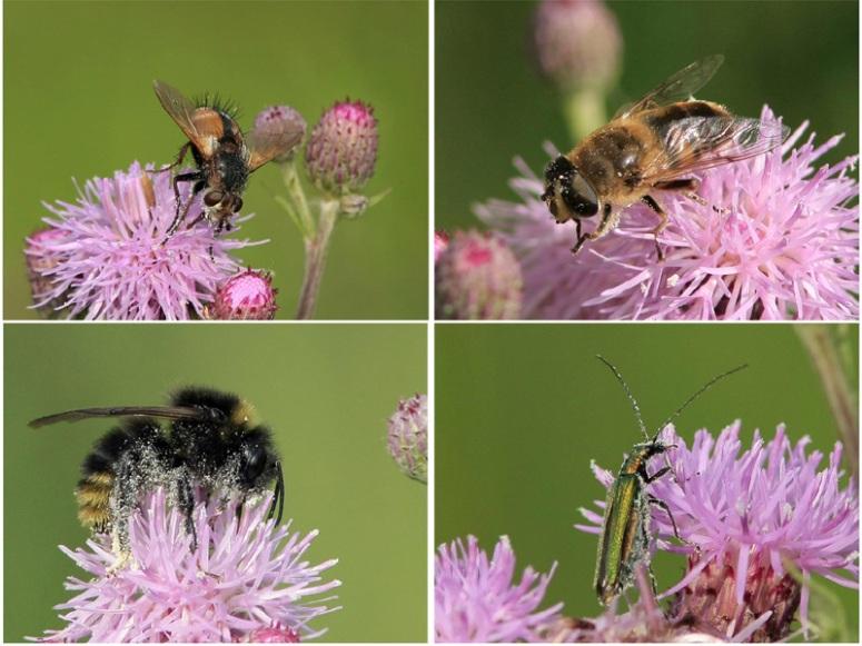 01-07-2010-pollinisation