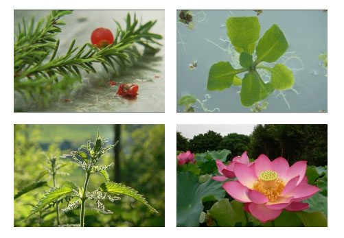 secrets-de-plante