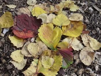 feuilles-mortes.JPG