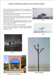 007 désert arbre ténéré 2