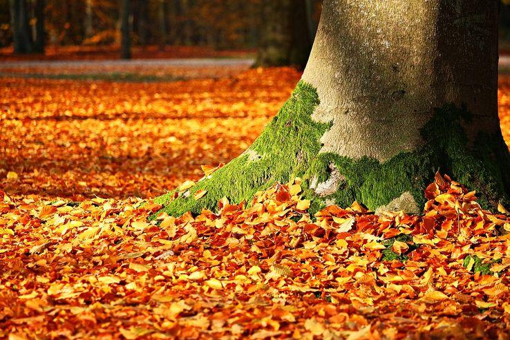 738_fall-foliage-1913485_960_720.jpg